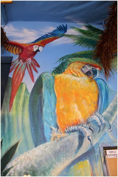 animal_bird_art_parrots_art_mural_Encinitas_San Diego