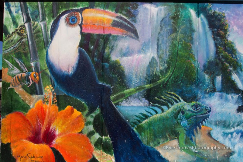 Toucan-Bird-Mural-Painting-Cardiff-SanDiego-CA